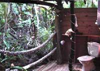 bathroom in daintreee rainforest accommodation