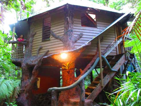 tree house accommodation in the daintree rainforest