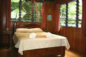 view on daintree rainforest from your window at cape tribulation B7B